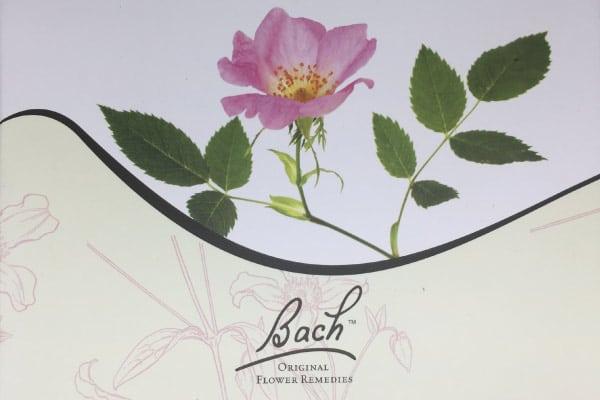 Conseillère fleurs de bach